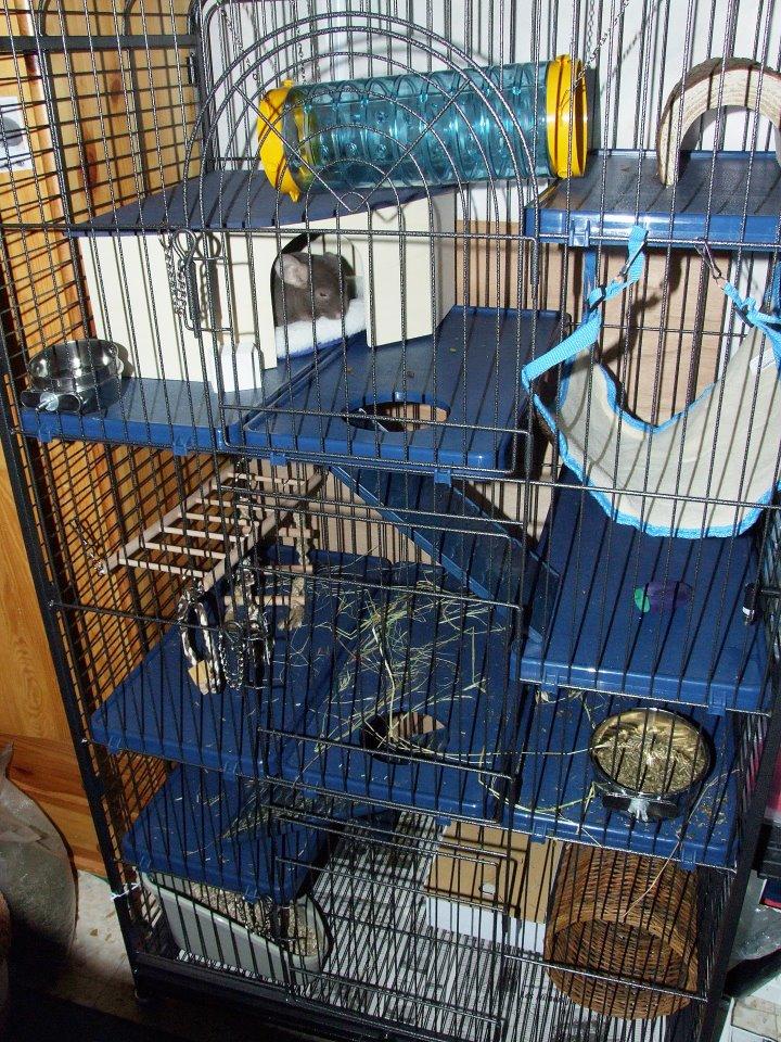 la cage de sweety 29687912
