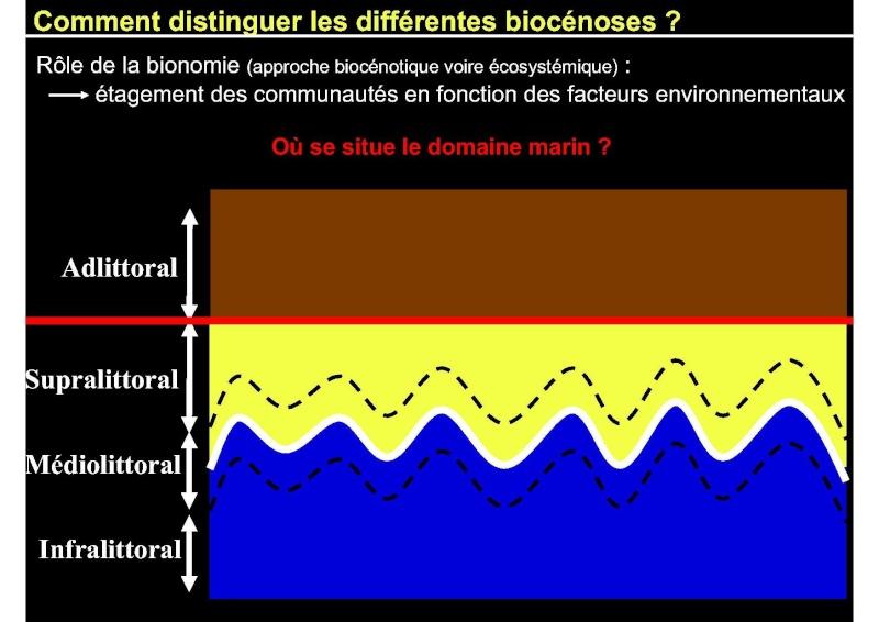 Structures et fonctionnement des écosystèmes benthiques  Cours_11