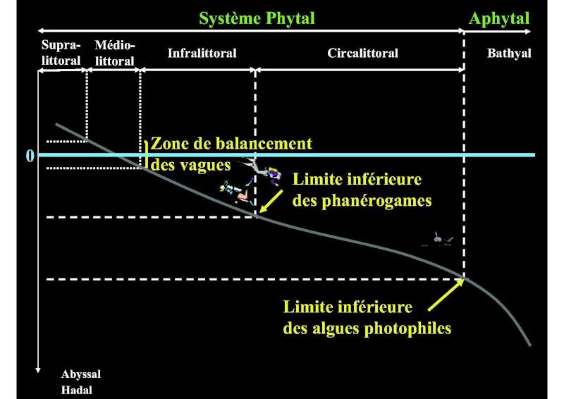 Structures et fonctionnement des écosystèmes benthiques  Cours_12