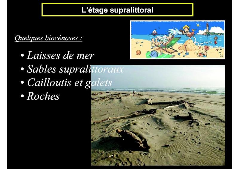 Structures et fonctionnement des écosystèmes benthiques  Cours_16