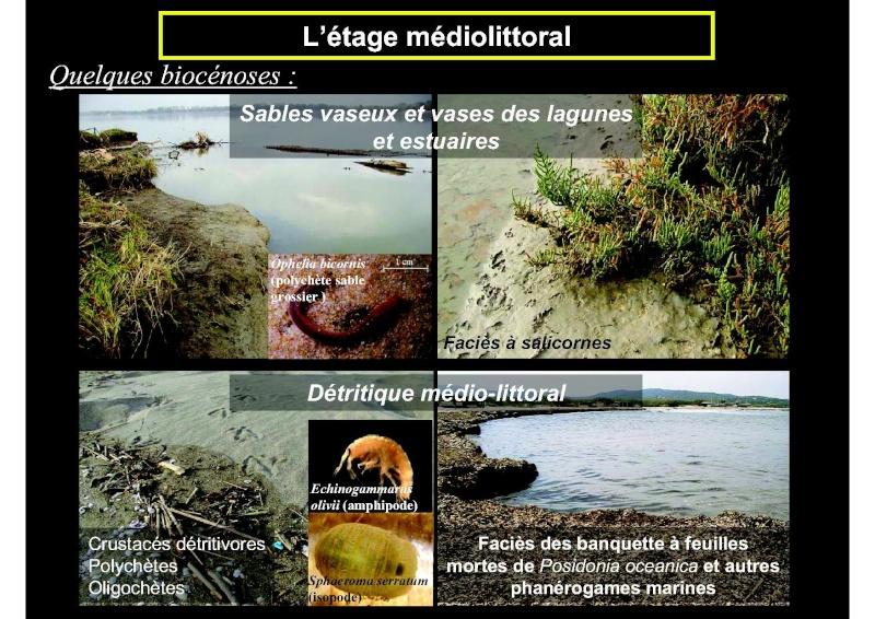 Structures et fonctionnement des écosystèmes benthiques  Cours_17