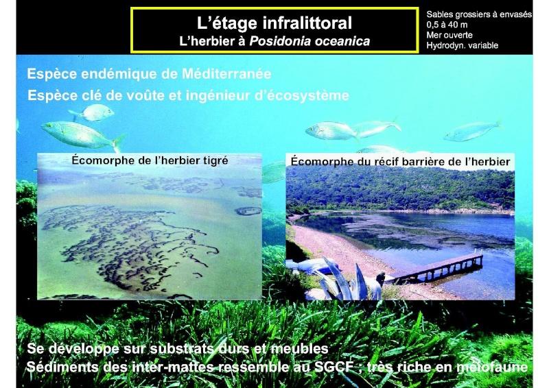 Structures et fonctionnement des écosystèmes benthiques  Cours_22
