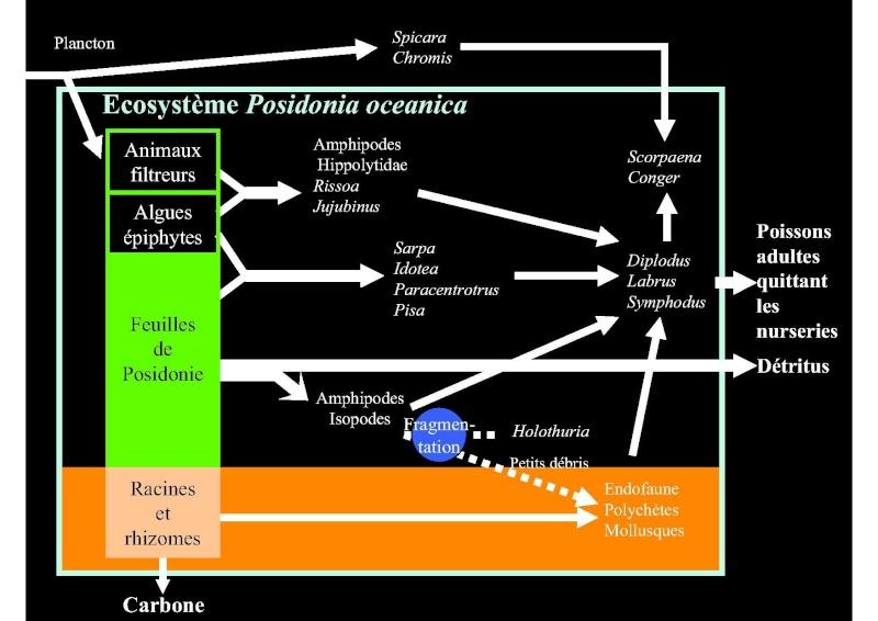 Structures et fonctionnement des écosystèmes benthiques  Cours_23