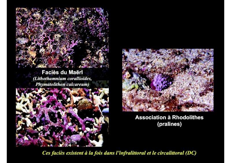 Structures et fonctionnement des écosystèmes benthiques  Cours_27