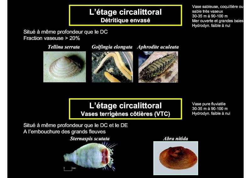 Structures et fonctionnement des écosystèmes benthiques  Cours_29