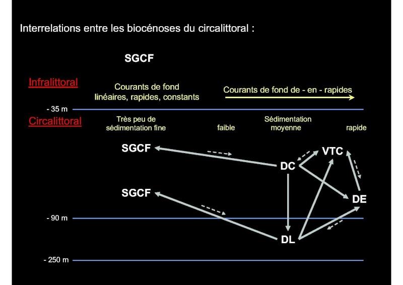 Structures et fonctionnement des écosystèmes benthiques  Cours_32