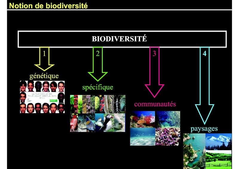 Structures et fonctionnement des écosystèmes benthiques  Cours_35