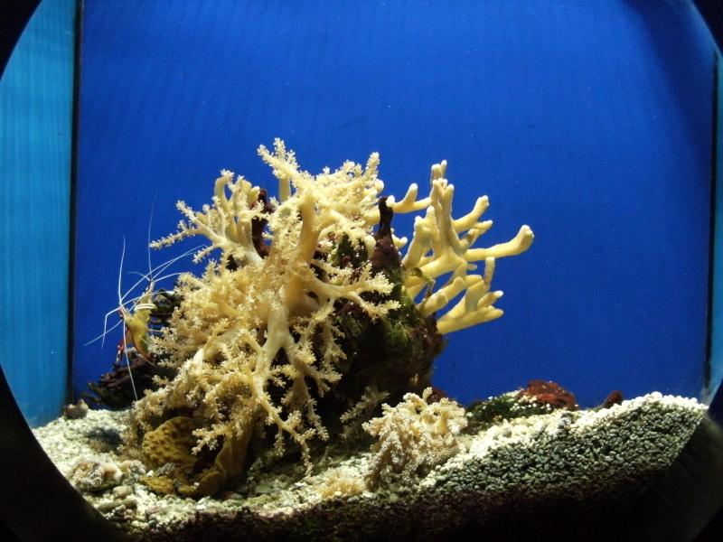 Aquarium de Monaco Dscf0611