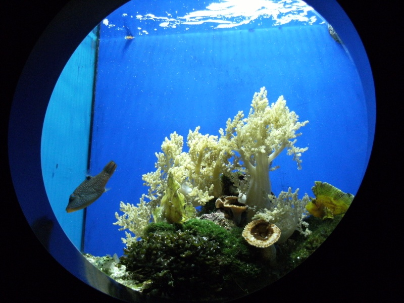 Aquarium de Monaco Dscf0612