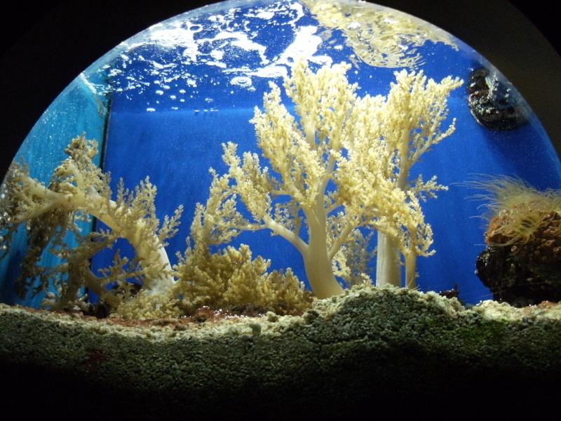 Aquarium de Monaco Dscf0613