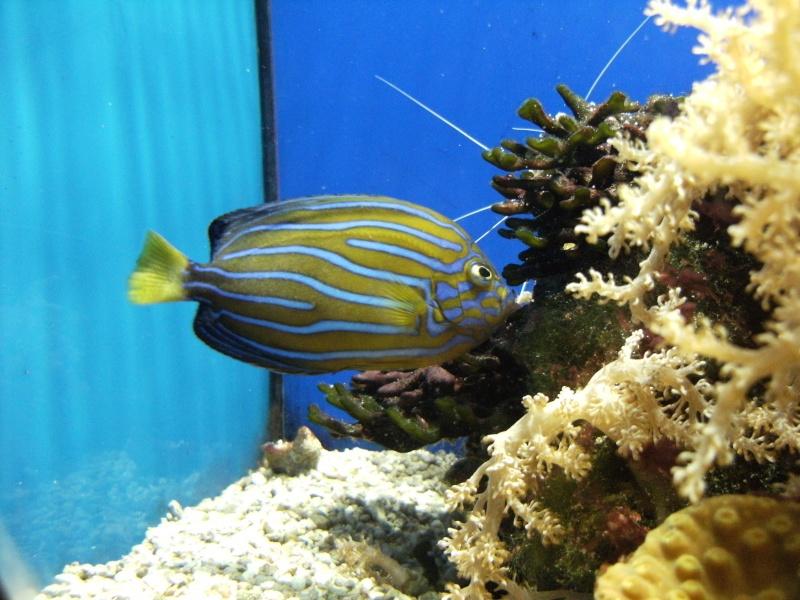 Aquarium de Monaco Dscf0614