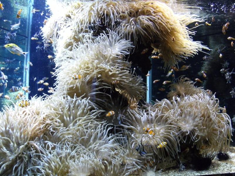 Aquarium de Monaco Dscf0714