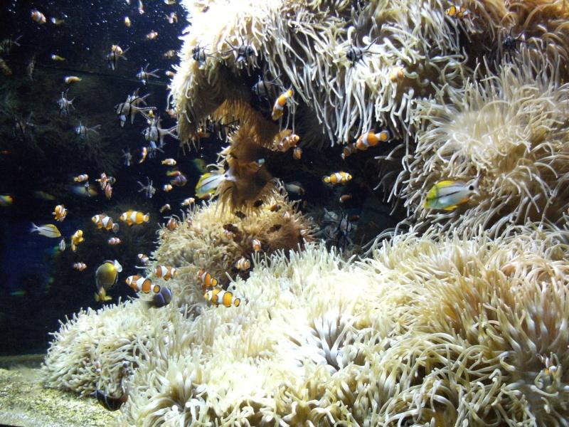 Aquarium de Monaco Dscf0715