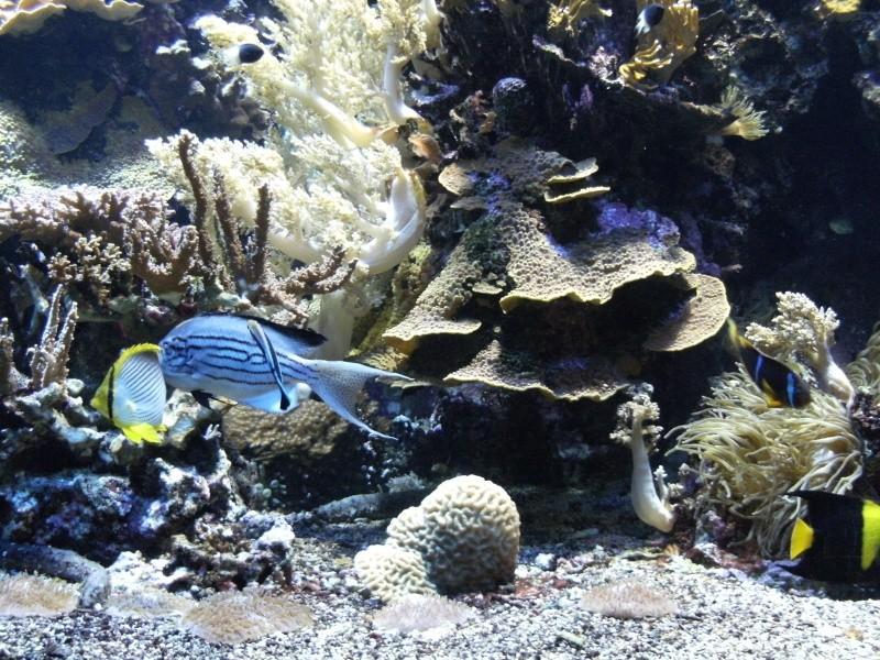 Aquarium de Monaco Dscf0716