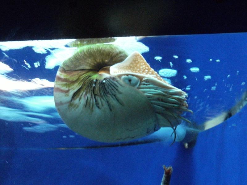 Aquarium de Monaco Dscf0720
