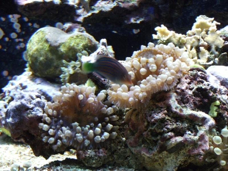 Aquarium de Monaco Dscf0721