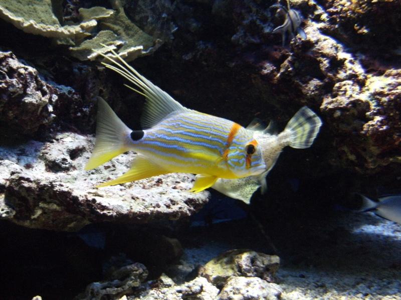 Aquarium de Monaco Dscf0722