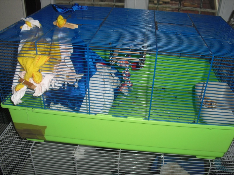 [A vendre] cage de quarantaine (ou maternité ?) Alsace Cimg1173