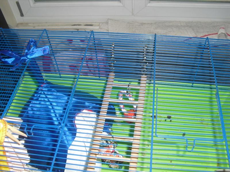[A vendre] cage de quarantaine (ou maternité ?) Alsace Cimg1174