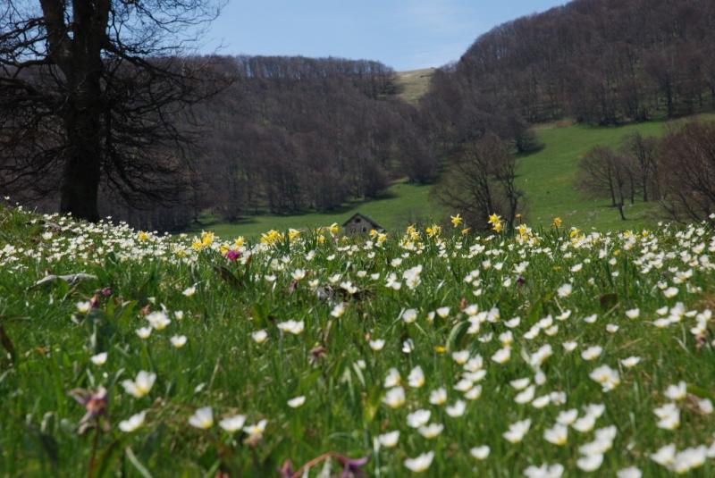Thème du mois de Mai 'Le renouveau du printemps' Mai08610