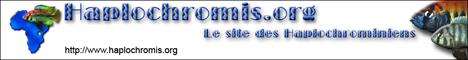 belgaquariophilie.forumactif.com - Portail Header10