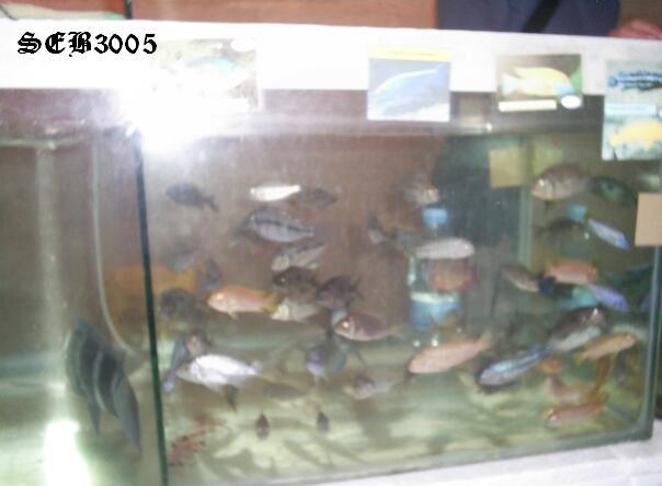 Photos de la bourse d'Arlon 2008 S5020917