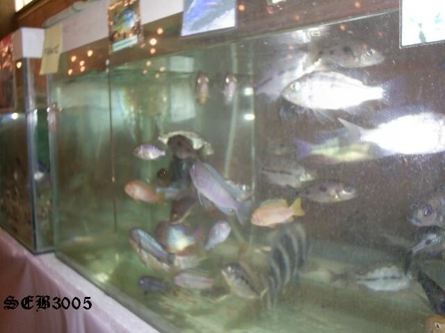 Photos de la bourse d'Arlon 2008 S5020918