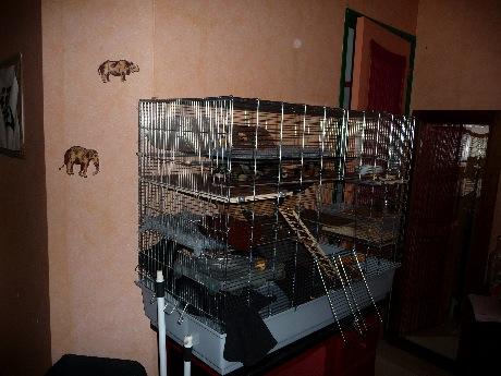 vend grande cage savic chichi 3 (84  ou 74 ) P1140410