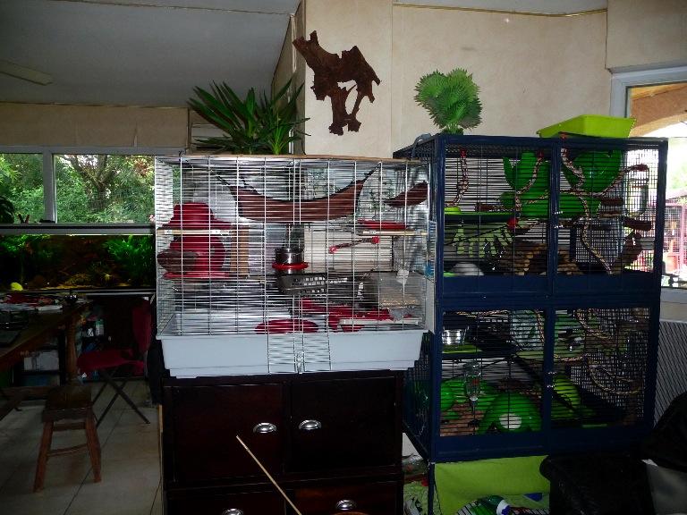 Recherche cage dans le 34 P1160234
