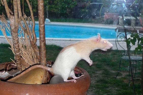 Mimolette, ma petite rescue... P1170713