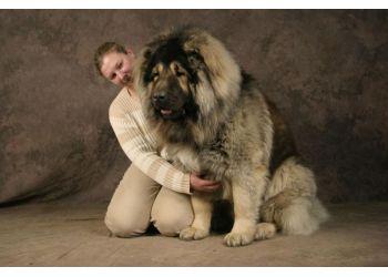 [Sondage] Top 10 des chiens les plus impressionants - Page 2 Caucas10