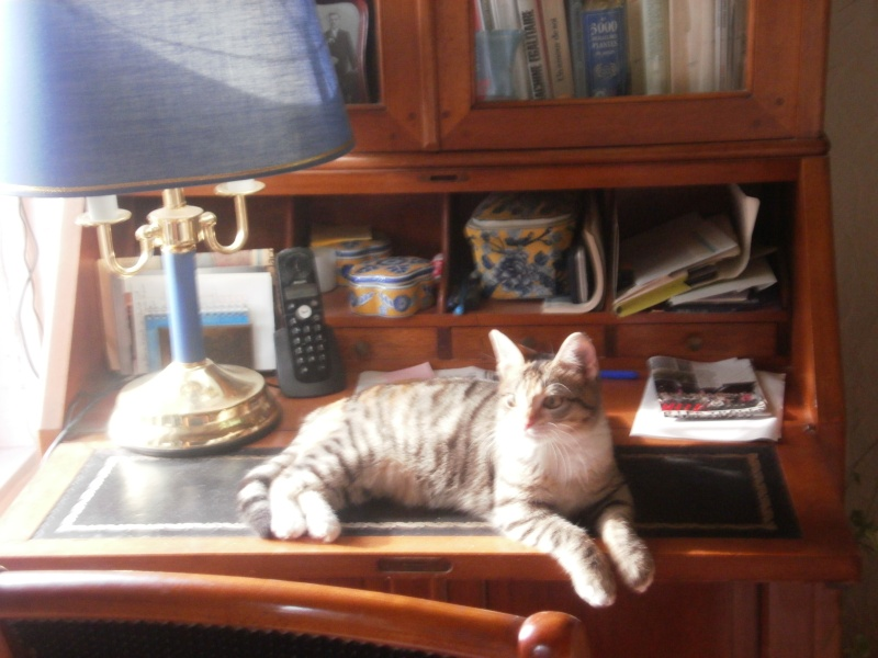 """les chats du """"chateau d'eau """" - Page 3 Agathe12"""