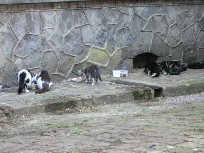 """les chats du """"chateau d'eau """" - Page 2 Cimg6725"""