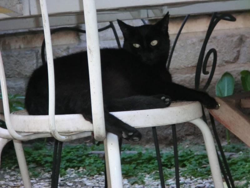 MIKO  jolie chatte noire 4 fractures du bassin a l'adoption - Page 2 Cimg8516