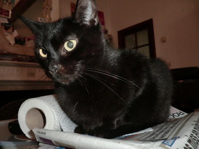 MIKO  jolie chatte noire 4 fractures du bassin a l'adoption - Page 2 Cimg8618