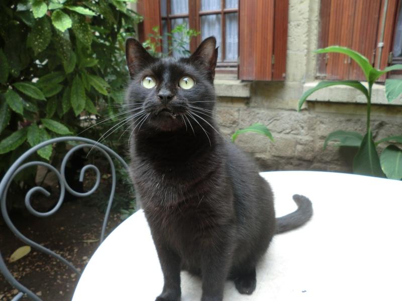 MIKO  jolie chatte noire 4 fractures du bassin a l'adoption - Page 2 Cimg9313