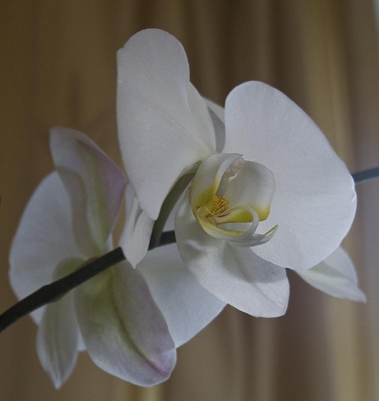 POTM Rnd 4 April 2008 Orchid10