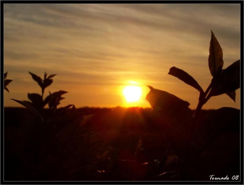 Lever/Coucher de soleil Image_65