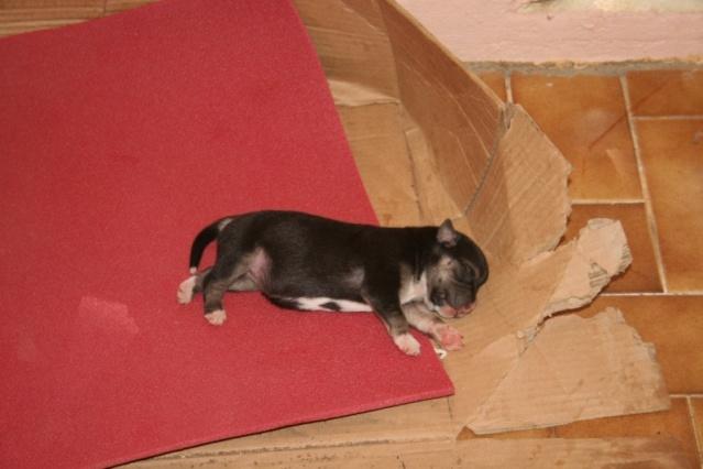trop de chien malheureux en guadeloupe Bebe_d10