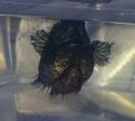 femelle énorme 2012-012