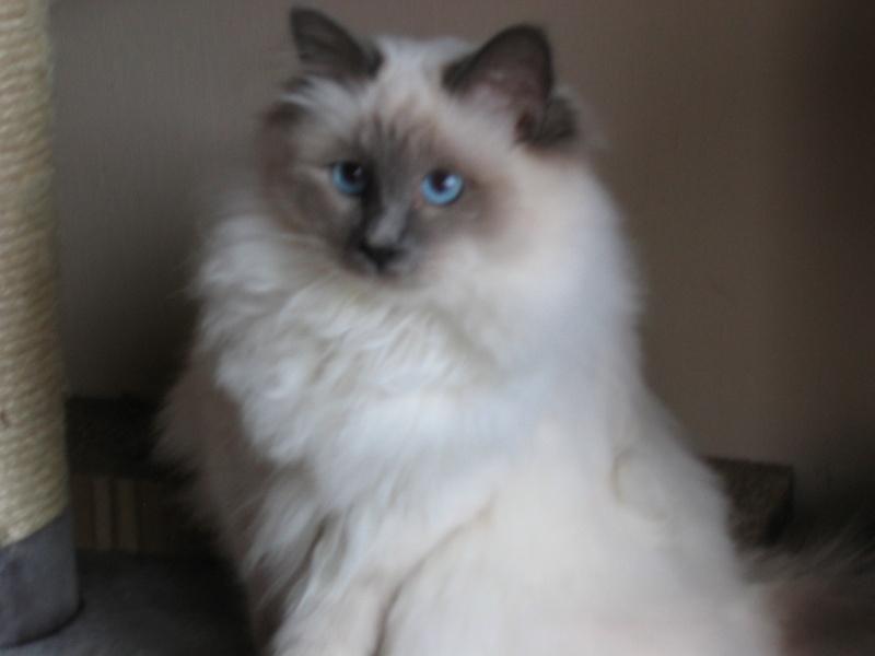 L anorexie du chat Casper10