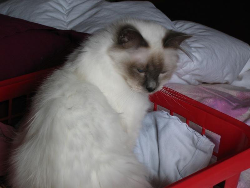 L anorexie du chat Casper11