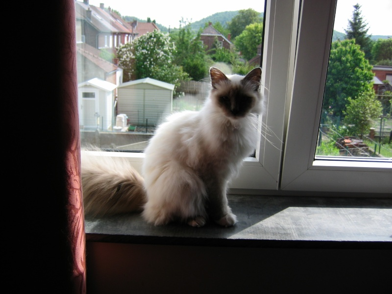 L anorexie du chat Casper12