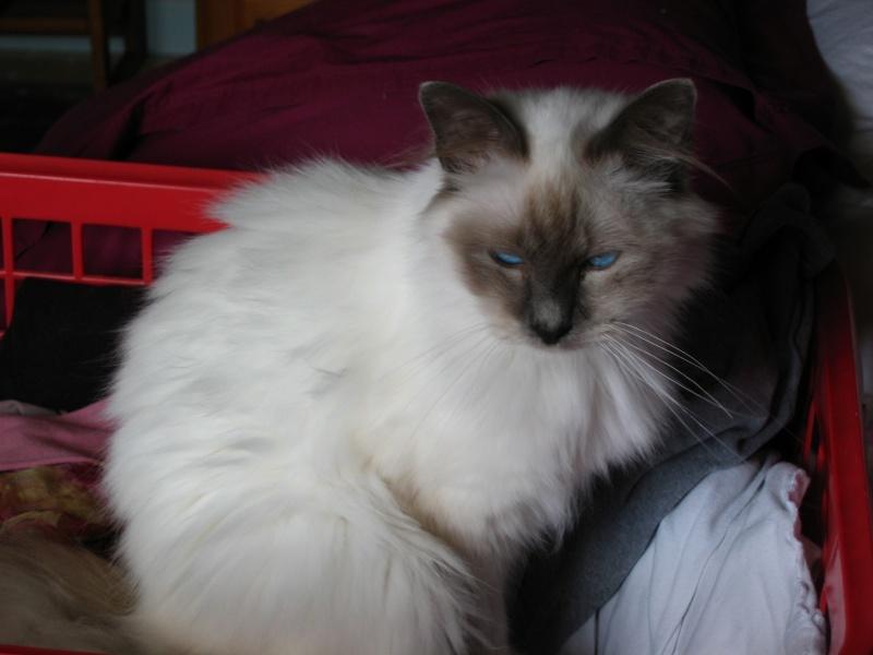 L anorexie du chat Casper13