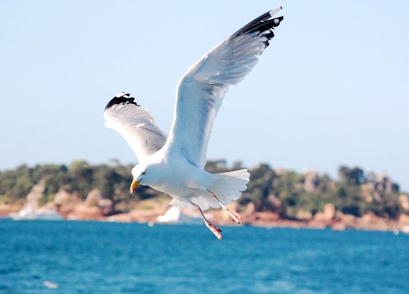Animaux, oiseaux... etc. tout simplement ! - Page 5 Bre6410