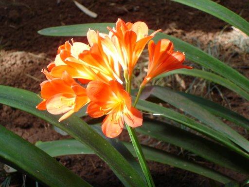 Fleurs ... tout simplement - Page 4 Dsc04611