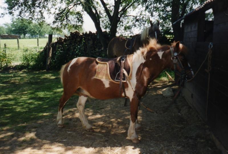 GENTIANE - ONC Poney née en 1979 - Adoptée en mai 2010 par gentianeve Img07410