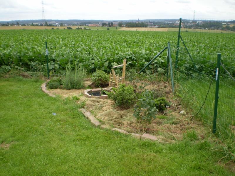 projet : jardin japonais. P8020010