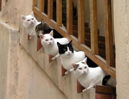8 août : Journée internarionale du chat — le chat dans toute sa beauté - Page 2 09ae9211