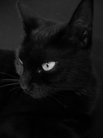 8 août : Journée internarionale du chat — le chat dans toute sa beauté - Page 2 0c3db310